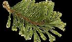 pine needle2.png