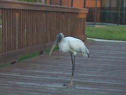 Wildlife around the resort