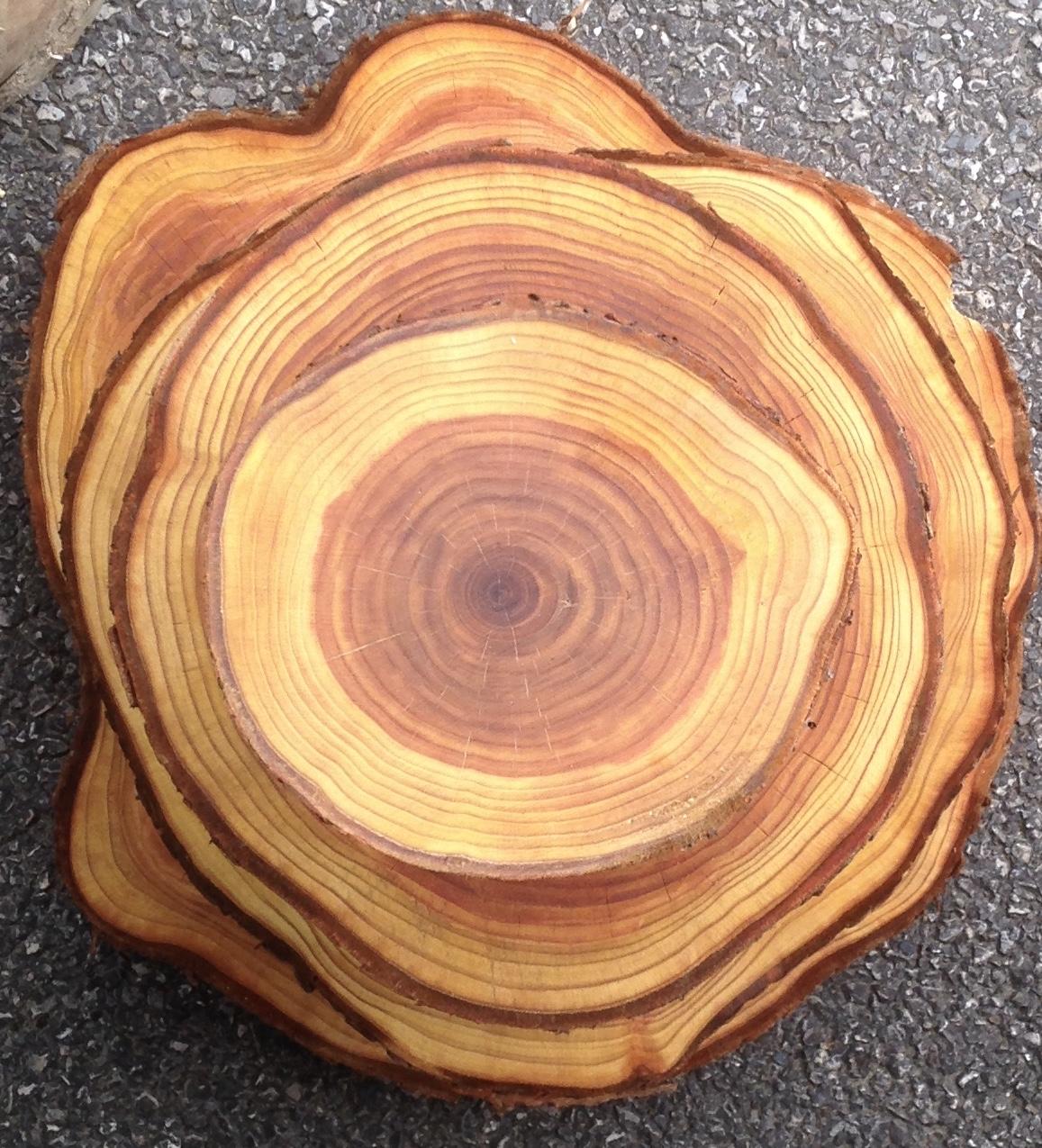 Log Slices