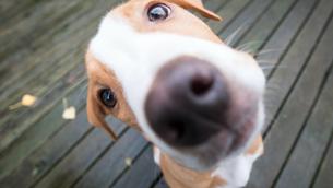 Celebra a tu lomito, hoy es el día mundial del perro