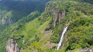 En peligro bosque de Nanchititla