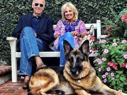 Arriban a la Casa Blanca 'Major' y 'Champ', mascotas Biden