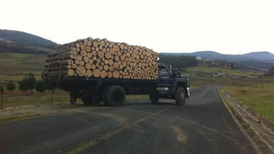Saquean bosques del sur.