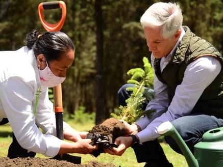 Viveros mexiquenses ayudan a que masa forestal crezca