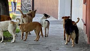 Ahora si, hasta 4 años de cárcel a quien maltrate animales de compañía en Edoméx