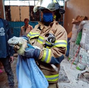 Unen esfuerzos Bomberos de Chimalhuacán y Zoonosis para el cuidado y protección de mascotas