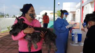 Del 19 al 25 de septiembre Jornada Nacional de Vacunación Antirrábica Canina y Felina