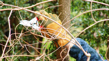 Samedi 30 janvier, partageons un repas et taillons des arbres