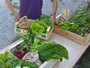 Paniers de légumes : démarrage de la saison d'ici la mi juin !