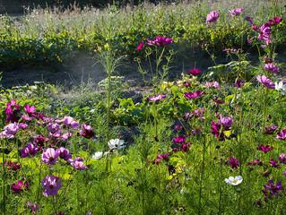 Des jardins fleuris pour des bouquets poétiques