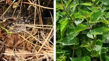 AGGRADEM: préparations naturelles pour l'agriculture, les espaces verts, les jardins et potagers