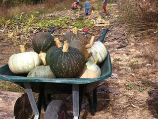 Agenda des jardins - Octobre