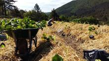 L'agenda du jardinage coopératif