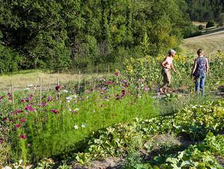 Soif et faim aux jardins