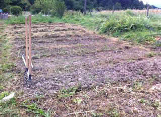 Des nouvelles des jardins : l'Hermite
