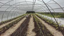 Les sessions de jardinage en juin