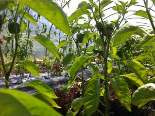 Des nouvelles des jardins : permacol