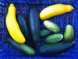 Jardinage collectif chaque semaine le lundi, mercredi et vendredi !