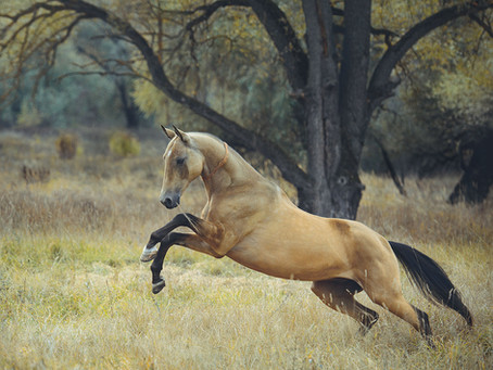 AKHALTEKE HORSES