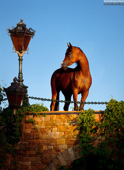 Charming bay horse standing on the bridge in the warm spot of setting sun