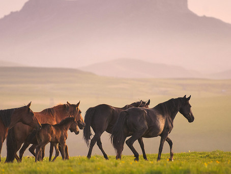 HORSES OF MOUNTAINS