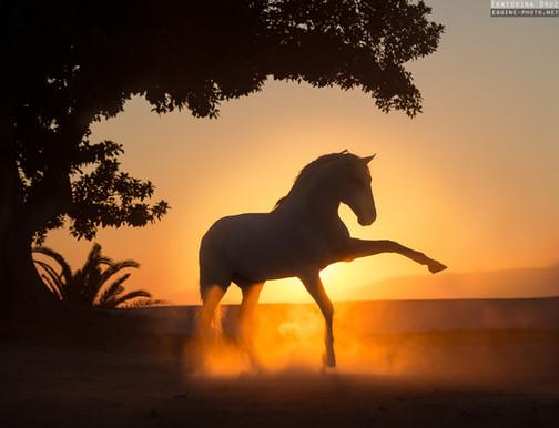 DANCING IN SUN RAYS