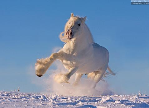 WHITE SNOW STORM