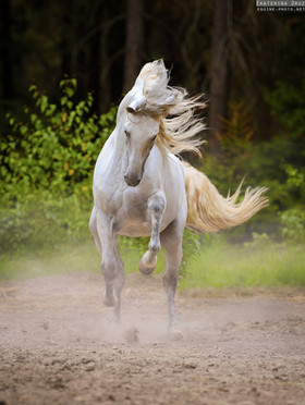 DANCING IN THE DUST