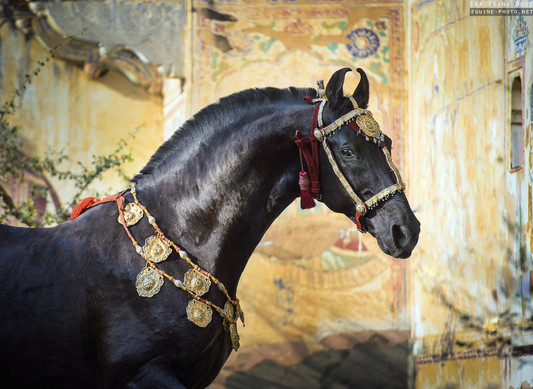 HORSE OF THE KINGS