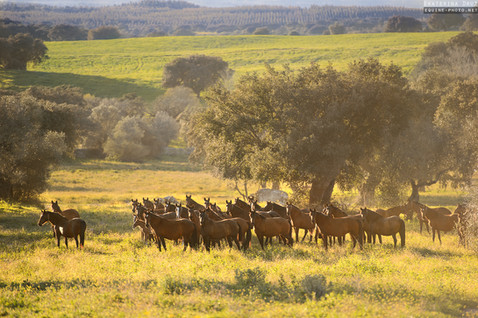ON THE VAST PASTURES OF PORTUGAL