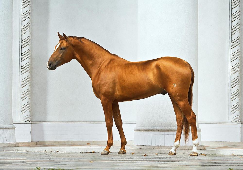 golden chestnut don horse