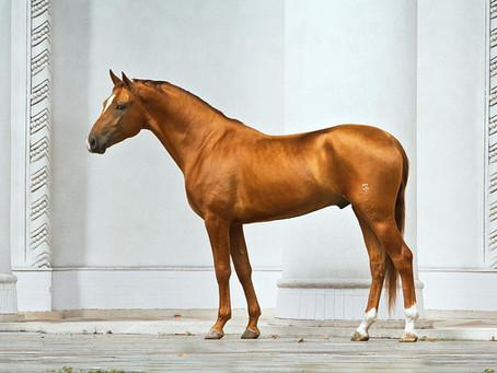 RUSSIAN HORSE BREEDS