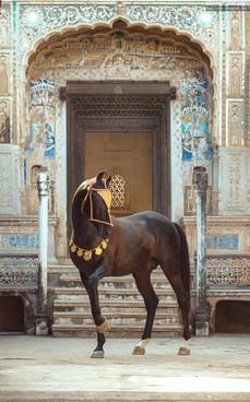 HORSE OF KINGS