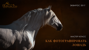 Master-class on equine photography in Equiros'17, Russia