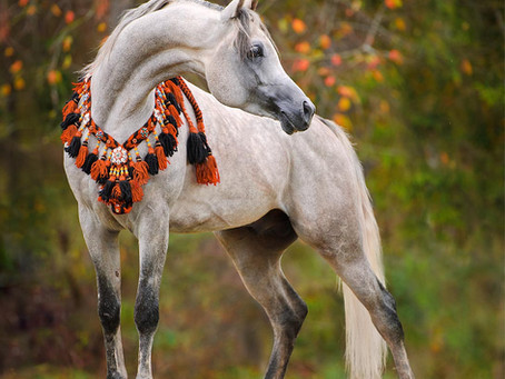 ARABIAN HORSES OF VALENTINA STUD FARM
