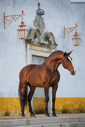 ROYAL LUSITANO