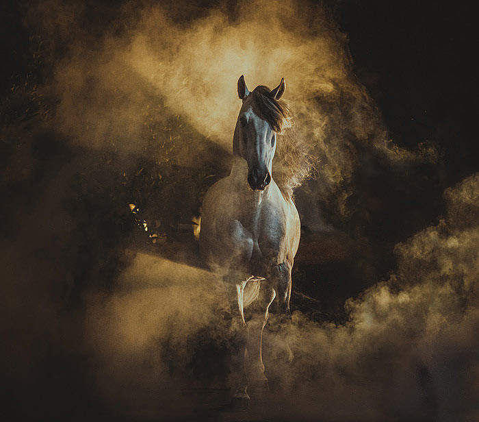 BROWSE THROUGH HUNDREDS OF NEW HORSE PHOTOGRAPHS
