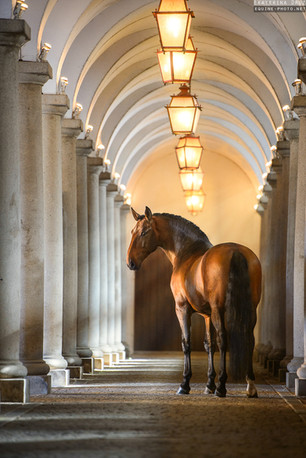 MASTER OF ROYAL STABLES
