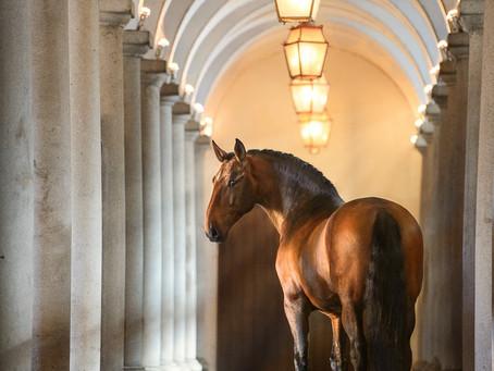 LUSITANO HORSES OF PORTUGAL II