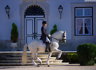NOBLE ART OF CLASSICAL DRESSAGE