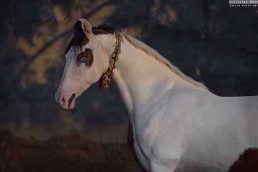 PORTRAIT OF VILLAGE HORSE