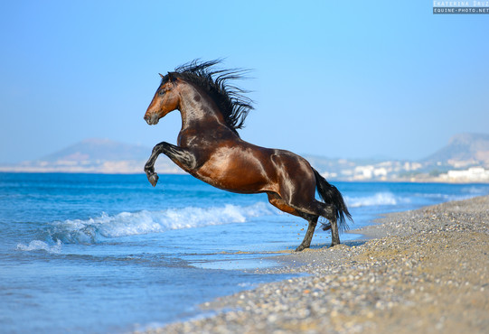 ANDALUSIAN AND THE SEA