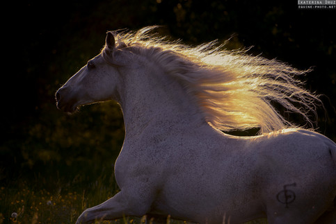PORTRAIT OF ANDALUSIAN IN MOTION