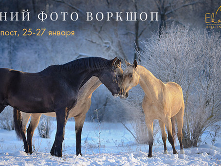 Winter equine photo workshop in Russia