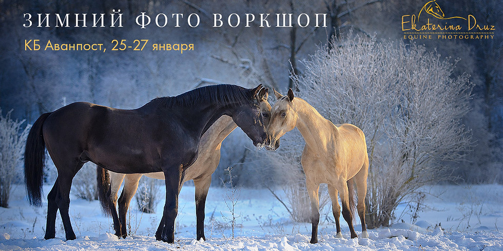 Зимний воркшоп