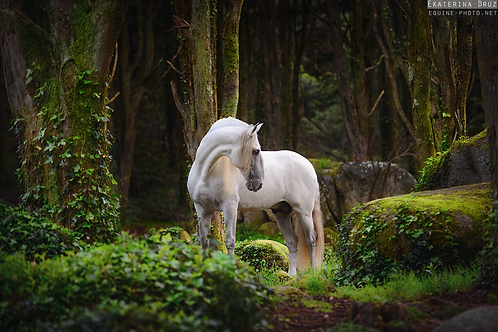 White Lusitano in green woods