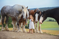 small girl with big draft horses