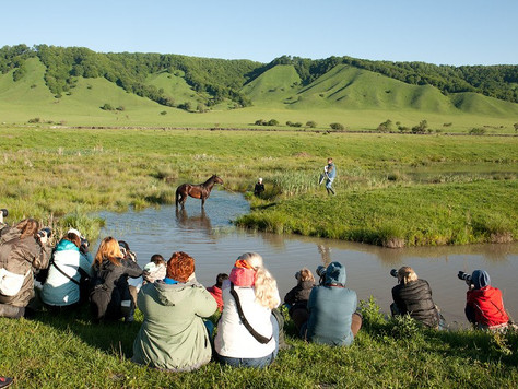 Photographing horse in beautiful landscape