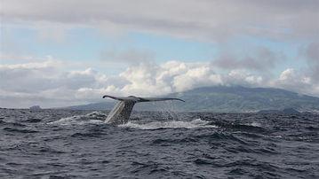 Das Geheimnis der Wale.jpg
