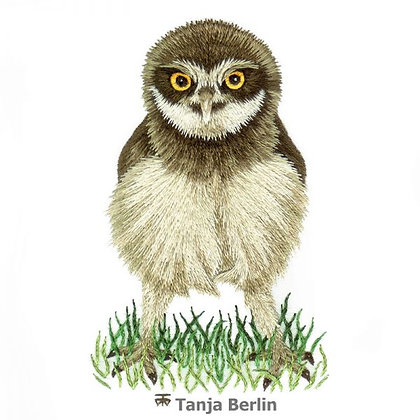 CATS Baby Burrowing Owl EMBROIDERY KIT by Tanja Berlin